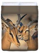 Black-faced Impalas Aepyceros Melampus Duvet Cover