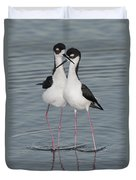 Black-necked Stilts Duvet Cover