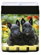 Black Scotties Duvet Cover by Greg Cuddiford