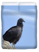 Black Vulture - Coragyps Atratus  Duvet Cover