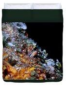 Blennys 1 Duvet Cover