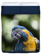 Blue And Gold Macaw V5 Duvet Cover