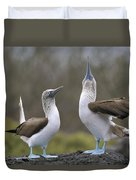 Blue-footed Boobies Courting Galapagos Duvet Cover by Tui De Roy