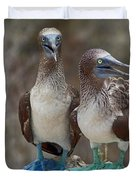 Blue-footed Boobies Duvet Cover