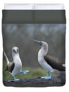 Blue-footed Booby Courtship Dance Duvet Cover