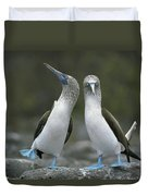 Blue Footed Booby Dancing Duvet Cover