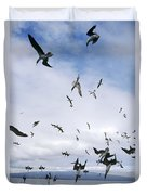 Blue-footed Booby Diving For Herring Duvet Cover
