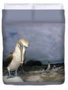 Blue-footed Booby Galapagos Islands Duvet Cover