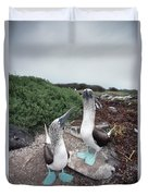 Blue-footed Booby Pair Courting Duvet Cover