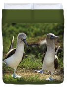 Blue-footed Booby Pair In Courtship Duvet Cover