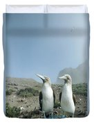 Blue-footed Booby Pair With Nesting Duvet Cover