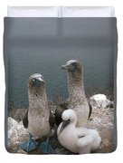 Blue-footed Booby Parents With Chick Duvet Cover