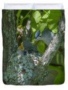 Blue-gray Gnatcatcher Nest Dsb261 Duvet Cover