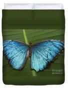 Blue Morpho - Morpho Peleides Duvet Cover