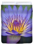 Blue Water Lily - Nymphaea Duvet Cover by Heiko Koehrer-Wagner