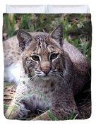 Bobcat 17 Duvet Cover