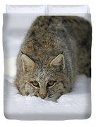 Bobcat Crouching In Snow Colorado Duvet Cover
