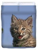 Bobcat Kitten Duvet Cover