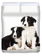 Border Collie Dogs, Two Puppies Duvet Cover