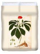 Botany: Ginseng Duvet Cover