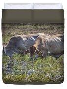 Brahman Cattle At The Waterhole Duvet Cover