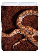 Brazilian Rainbow Boa Duvet Cover
