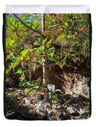 Breadfruit Tree Duvet Cover