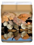 Brewers Sparrows At Waterhole Duvet Cover