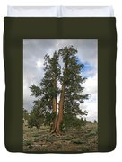 Brisslecone Pine Tree Duvet Cover