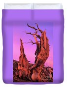 Bristlecone Pine At Sunset White Mountains Californa Duvet Cover