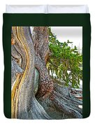 Bristlecone Pine On Ramparts Trail In Cedar Breaks National Monument-utah  Duvet Cover