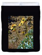 Brittlebush On Borrego Palm Canyon Trail In Anza-borrego Desert Sp-ca Duvet Cover