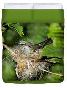 Broad-billed Hummingbird In Nest Duvet Cover