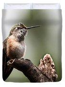 Broad-tailed Hummingbird Sit  Duvet Cover