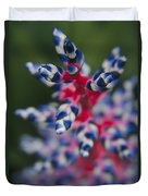 Bromeliad - Aechmia Dichlamydea - Guzmania Lingulata Duvet Cover