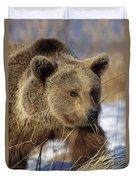 Brown Bear Eating Dry Grasses Duvet Cover