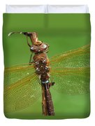 Brown Hawker Dragonfly Switzerland Duvet Cover