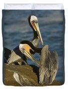 Brown Pelicans Duvet Cover