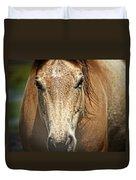 Buckskin Stallion Duvet Cover