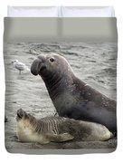 Bull Approaches Cow Seal Duvet Cover by Mark Newman
