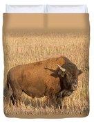 Bull Bison At The  Elk Ranch Grand Teton National Park Duvet Cover