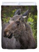 Bull Moose   #5654 Duvet Cover