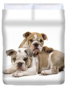 Bulldog Puppies, One On Top Of The Other Duvet Cover