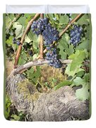 Bunches Of Red Wine Grapes Growing On Vine Duvet Cover