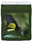 Butterfly 029 Duvet Cover
