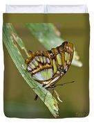 Butterfly Siproeta Stelenes Duvet Cover