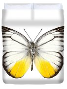 Butterfly Species Cepora Judith  Duvet Cover
