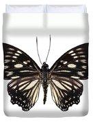 Butterfly Species Euripus Nyctelius Euploeoides  Duvet Cover