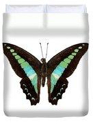 Butterfly Species Graphium Sarpedon Duvet Cover