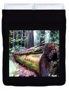 California Redwoods 2 Duvet Cover